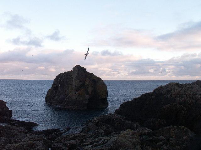 Lamba stack Out Skerries Shetland
