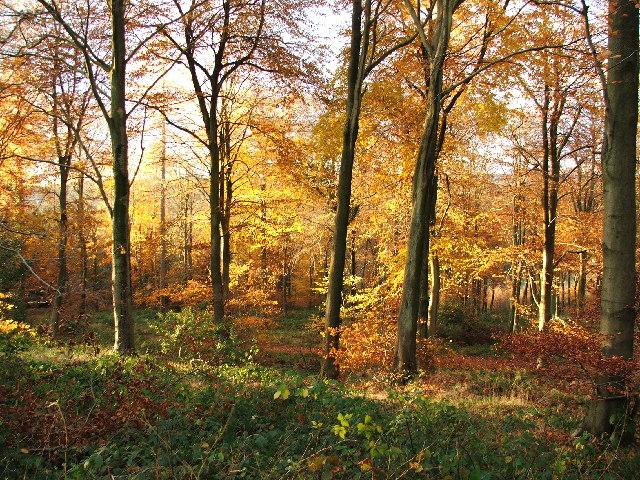 Autumn view through the trees.