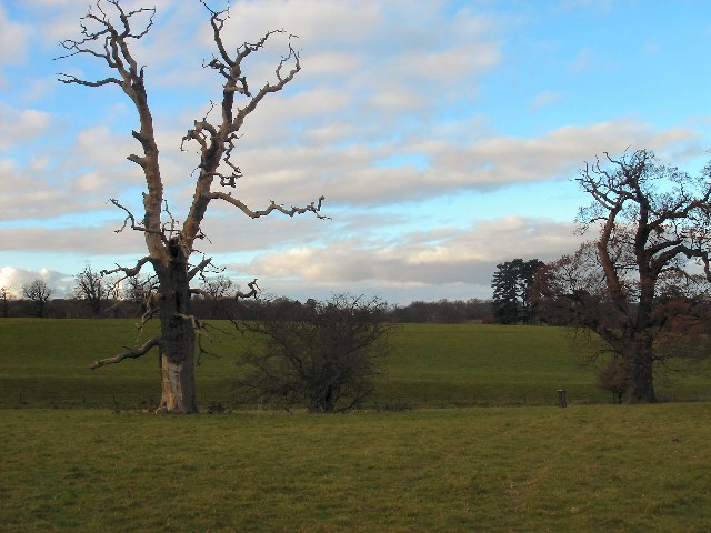 Trees in Ickworth Park