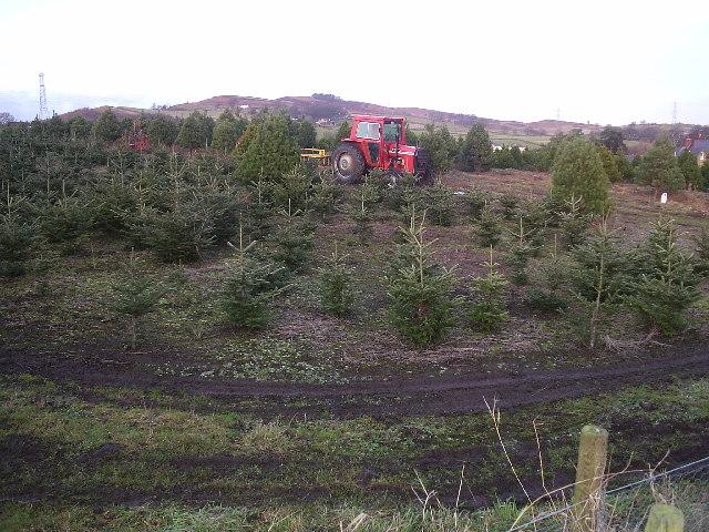 Geoff's Christmas Tree Farm.
