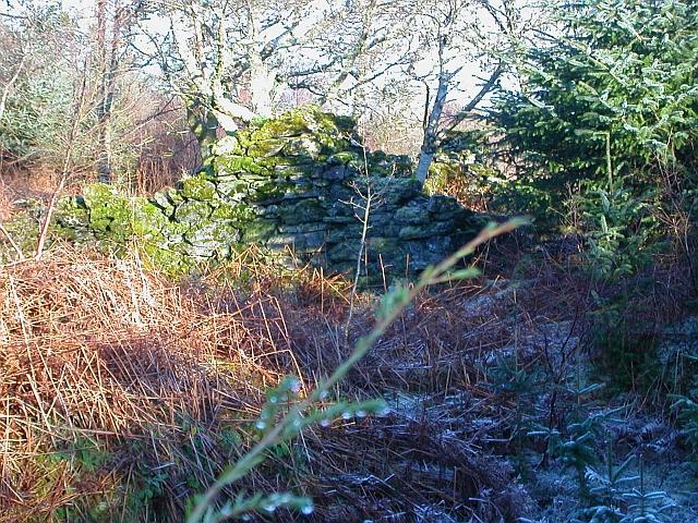Overgrown Ruin