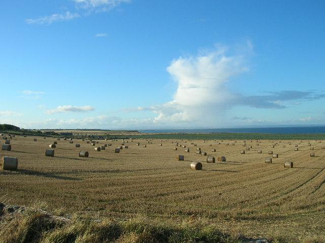 Fife Farmland