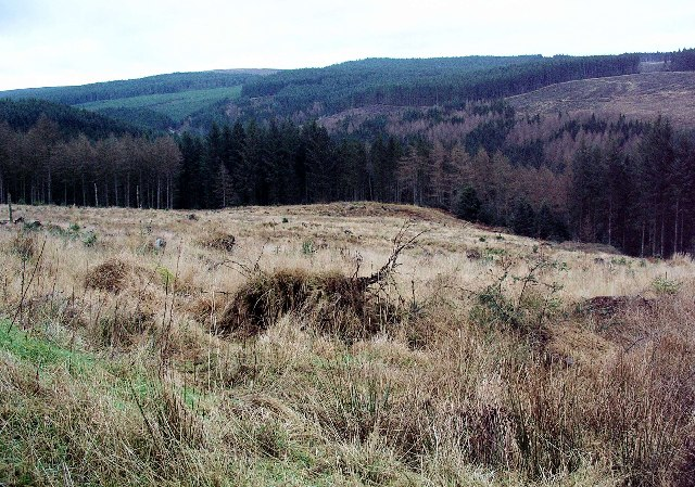 Above White Naze, Forest of Ae