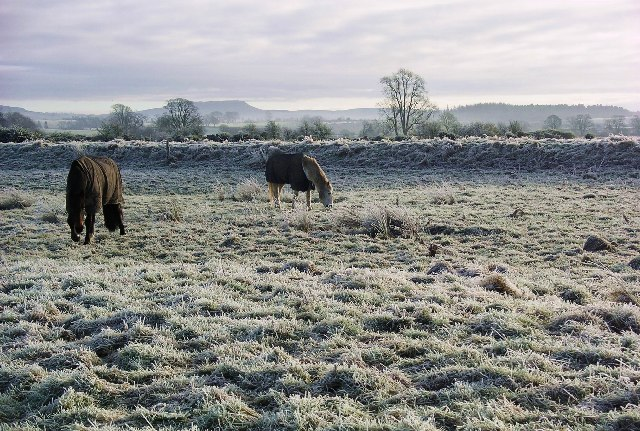 Ponies by the river Annan