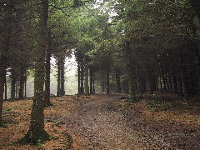 Woodland at Beacon Fell Country Park, Near Preston
