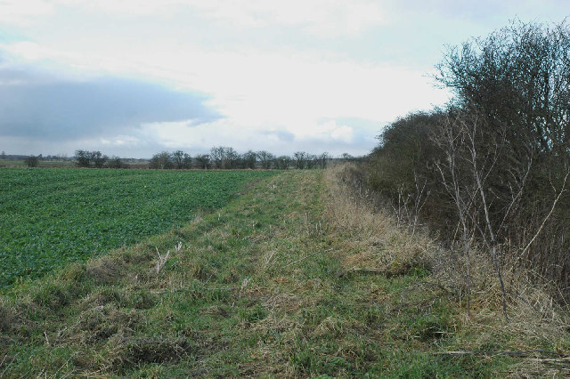Winter hedge on The Carrs