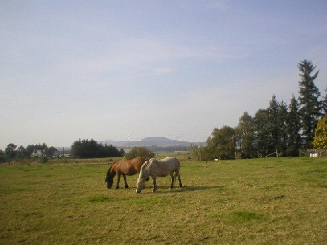 Horses Grazing near Alford