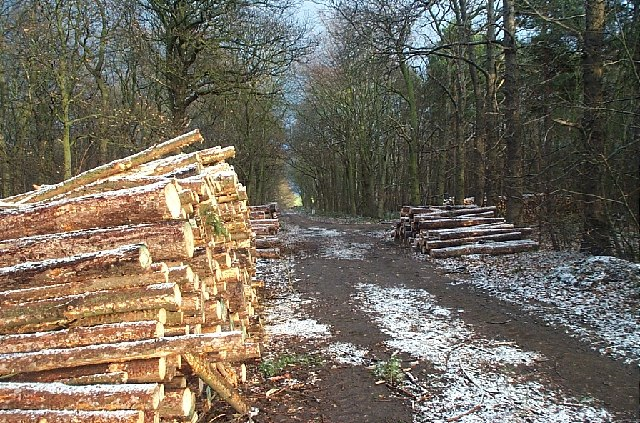 Timber at Cuckney Hill
