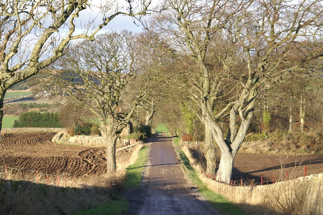 Track to Angus Chainsaws, Millfield