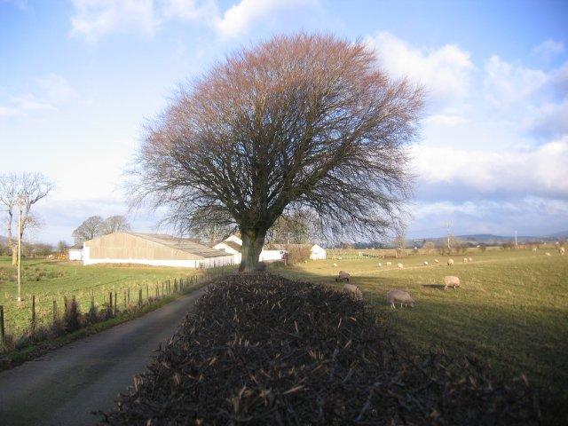 Low Leys Farm.