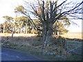 NY0320 : The Edge of Tutehill Wood. by John Holmes