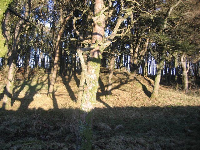 Tutehill Wood Northern end.
