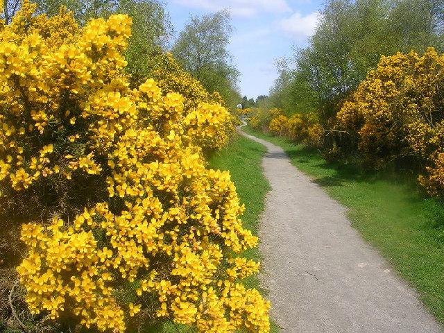 Scotstown Moor Nature Reserve