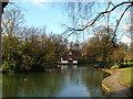 SJ8651 : Tunstall Park Lake by Steve Lewin