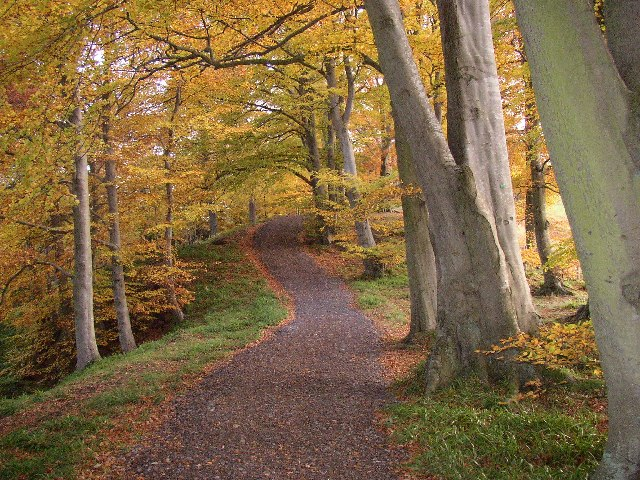 Beech Walk, Ridley Hall