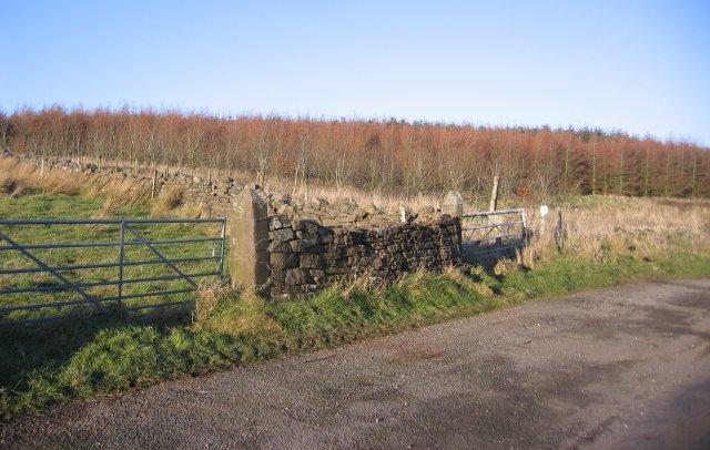 Edge of new wood at Tutehill.