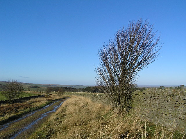 Track leading to Stobb Cross