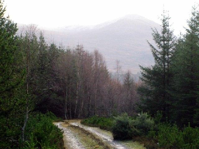 Torr Wood