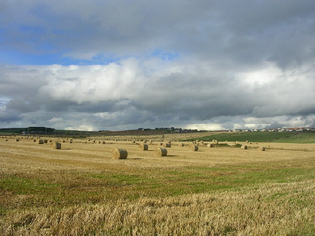 Fields between Newtonhill and Muchalls