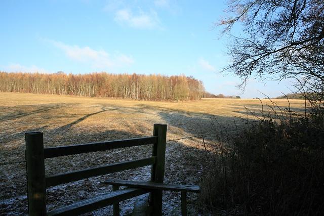 Wayfarer's Walk looking towards Preshaw Wood