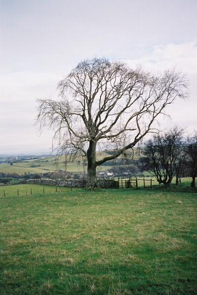 Pastures and tree above Street Head