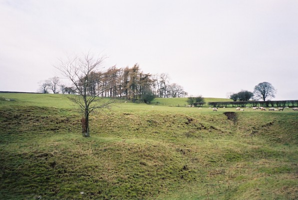 Sheep grazing at an old quarry