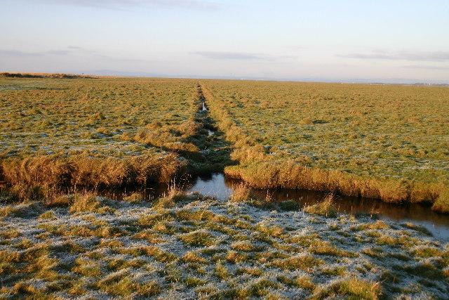 Salt Marsh Drain