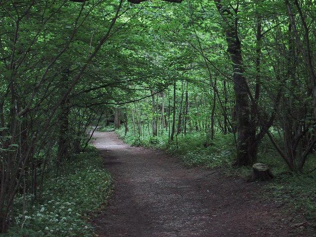 Woodland at Bolton Abbey