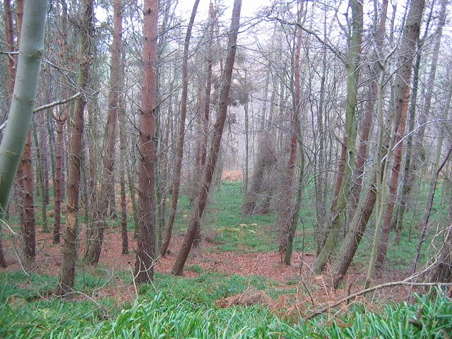 Pressmennan Wood