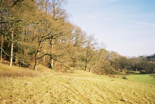 Wooded bank near Sebergham