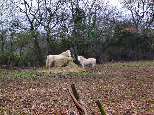 Horses near St Andrews Major - Glamorgan