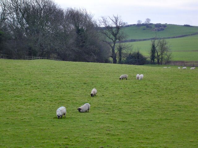 Sheep near Cog, Sully