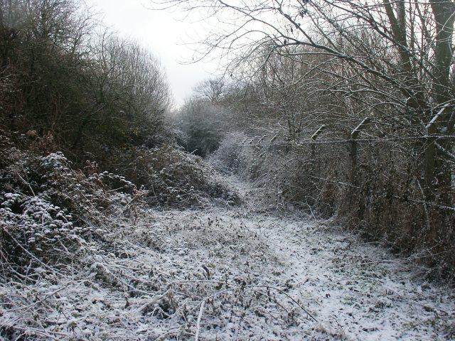 Railway embankment, Haydon Hill
