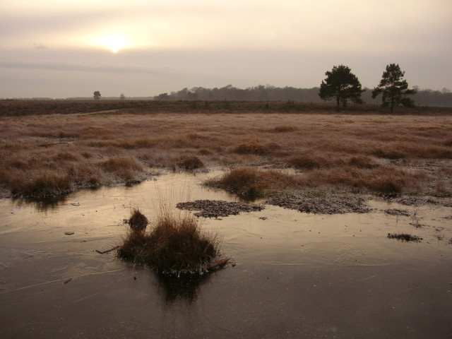 Low winter sun over a frosty Shatterford Bottom, New Forest
