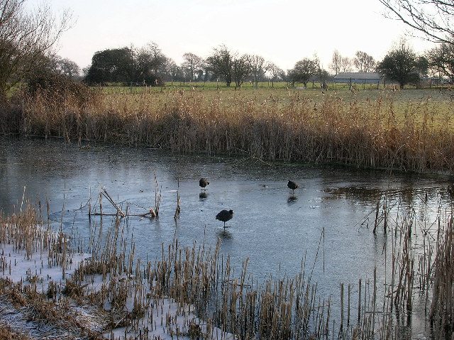 Ducks on the frozen Chichester Canal