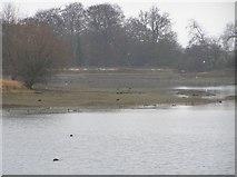SK4879 : Pebley Pond by David Morris