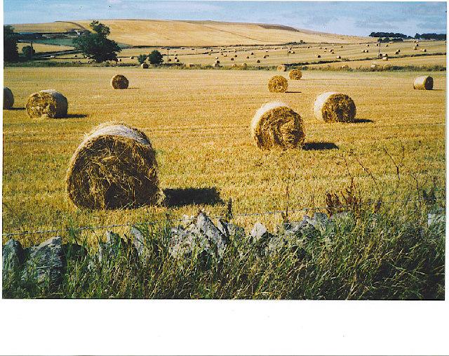 Glen Dronach, harvest