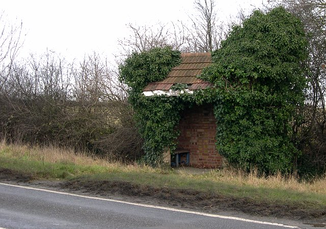 An Overgrown Bus Shelter