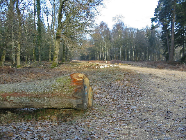 Forest product North Oakley Inclosure New Forest