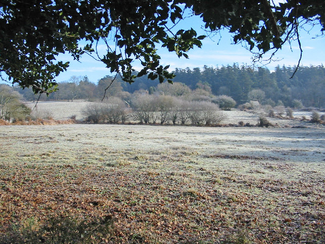 Grazing land around Bolderwood Farm New Forest