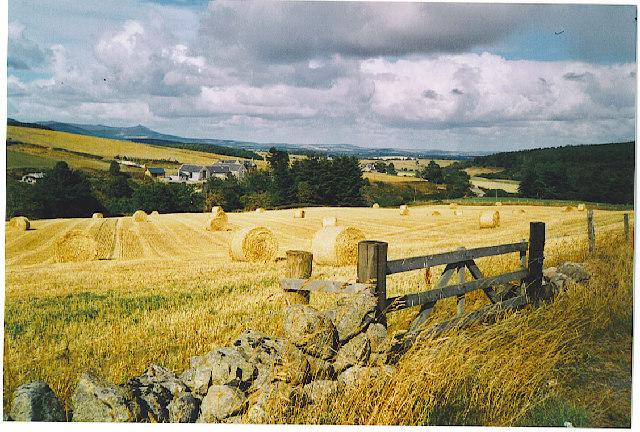 Harvest west of Midmar