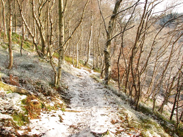 Path in Currie Woods