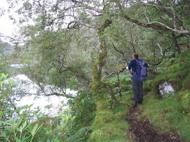 Path through woods alongside Loch Moidart