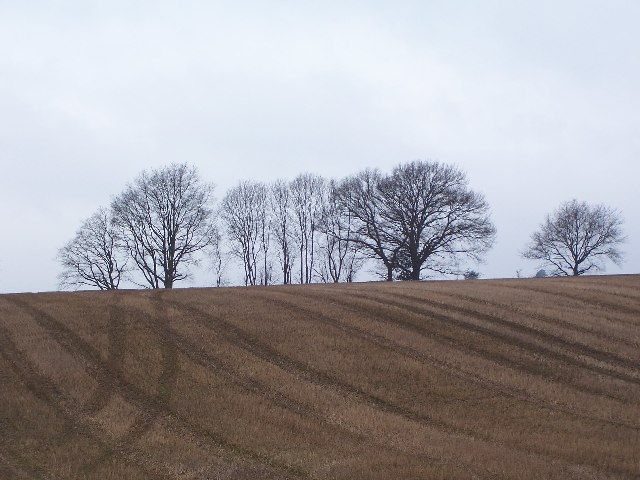 Trees on field boundary, Westmark Farm