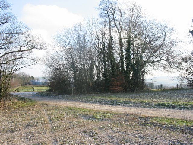 Looking East through small copse towards Highden Barn