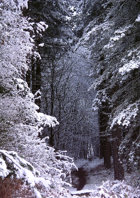 Snow, Sherwood Pines