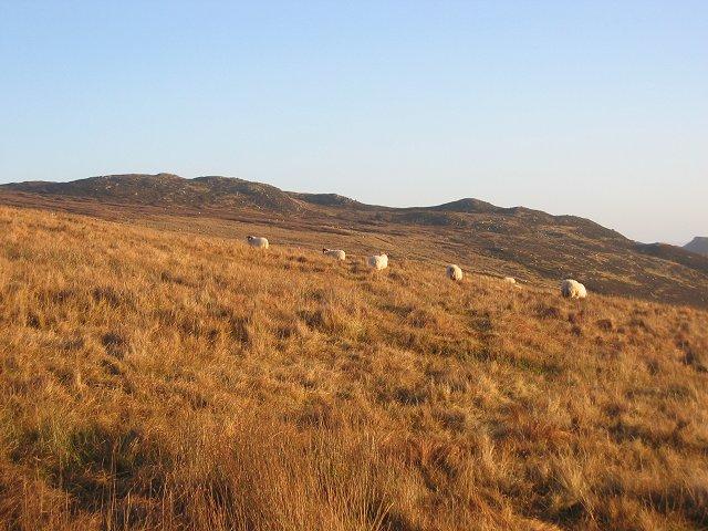 Hill grazing, Glen Lednock.
