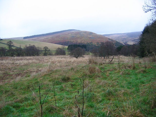 Ungrazed fields, Yair Forest.