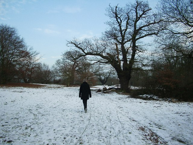 Winter Walking in Epping Forest