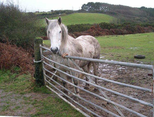A Damp Horse